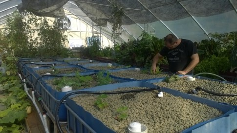 Aquaponic grow beds at the Innovation Center.